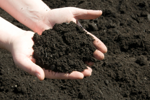 our plan - clean soil